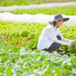 【群馬人をたずねて】地域・社会貢献の新しいカタチ。個性豊かな野菜のブーケで農業を守る、ベジフラワーアーティスト。