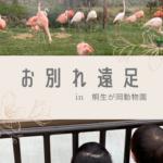 【ココロ託児室】お別れ遠足in桐生が岡動物園