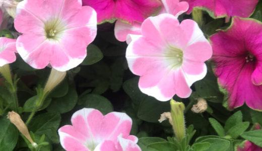 ハートのお花♡