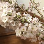ココロデイサービス🌸桜が満開★*゜
