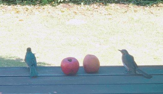 【148cm社長日記】りんごを食べにやってきた。